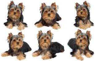 uma sessão de fotos do cachorro