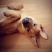 retrato de um filhote de cachorro divertido.