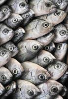 peixe no mercado foto