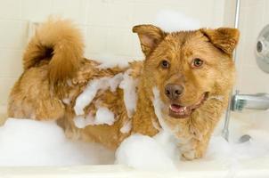cachorro tomando banho foto