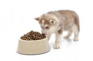 cachorro comendo comida foto