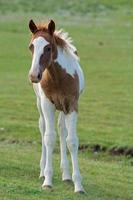 cavalos foto