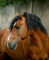 cavalo foto