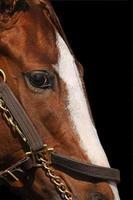 close-up detalhes do rosto de cavalo de corrida foto