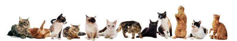 gatos em estúdio foto