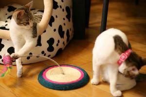 gato jogando um truque foto
