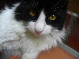 mirada de gato foto