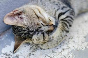 pequeno gatinho dormir foto