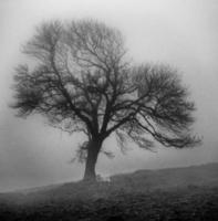 ovelha névoa foto