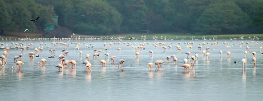 flamingos !!! foto