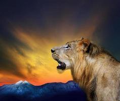 close-up tiro na cabeça do jovem leão foto