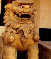 Leão dourado foto