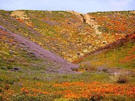 flores silvestres na primavera foto