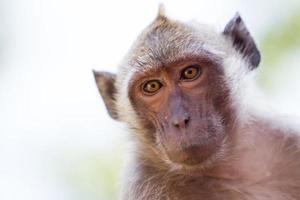 macaco foto