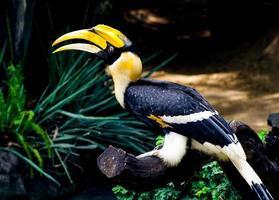 colorido de pássaro de conta de chifre foto