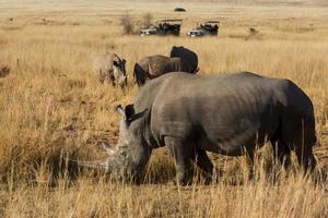 safari de rinoceronte foto