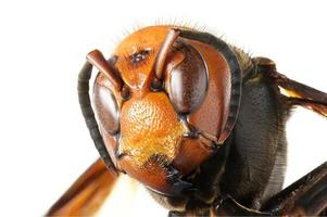 vespa gigante japonesa foto