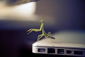 o mantis