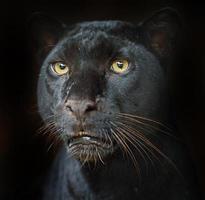 leopardo de retrato foto