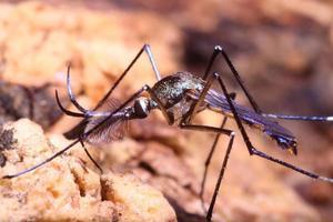 pequenos insetos foto