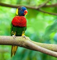 papagaios exóticos foto