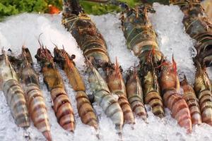 camarão mantis foto