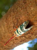 inseto inseto na natureza foto