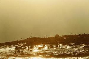 silhueta de selo contra um nascer do sol na ilha de selo