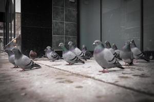 pombos em repouso na calçada da cidade foto