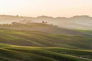 Toscana ovelhas em rolando campos verdes no pôr do sol amarelo. foto