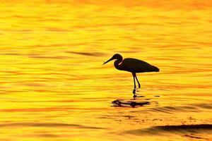 pássaros de silhueta ao pôr do sol foto