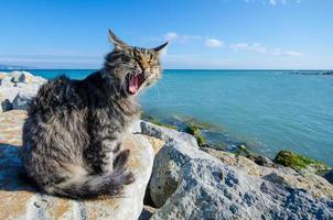 gato sentado à beira-mar foto