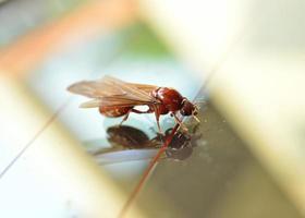 formiga branca de cupim foto