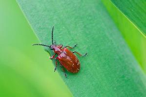 bug vermelho foto