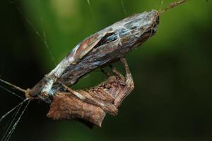 segunda vida dos insetos foto