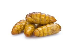 insetos fritos crocantes menu incrível