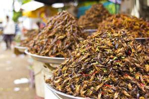 notório comer insetos da Ásia foto