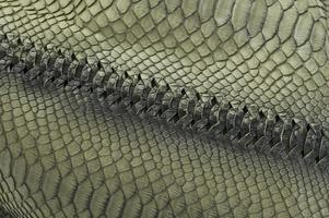 textura de couro de cobra verde foto
