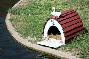 casa do pato foto