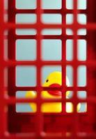 brinquedo pato atrás da prisão