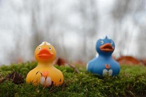 modelagem de patos de banho na floresta foto