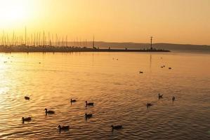 patos no lago foto