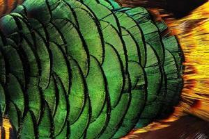 padrão de penas de pavão colorido foto