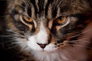 olhar de gato foto