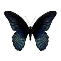borboleta de pavão de paris foto