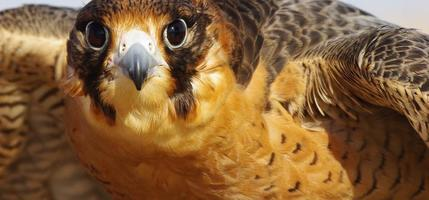falcão ave de rapina foto