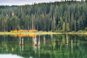 outono, em, ganso, lago, gifford, pinchot, floresta nacional foto