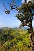 pico da montanha na floresta tropical