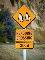 roadsigns amarelo aviso para pinguins cruzando a estrada foto