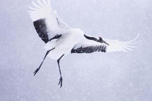 pássaro foto